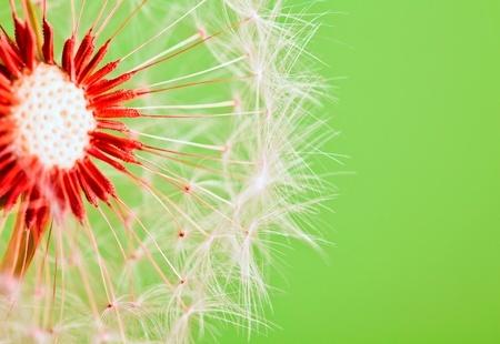 123Rf-flower-9662507_s
